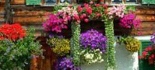 Balkonlarınızı rengarenk çiçek bahçelerine dönüştürün