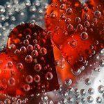 Aşk biter sevgi kalır